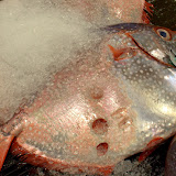 Fish Market Honolulu