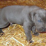 Bluebelle & Cobys 4/19/10 litter - IMG_0767.JPG