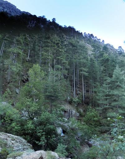 La forêt en RD en bas de la Combe Rouge