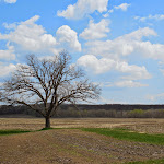 Oak in May_Chippewa Falls_WI_Jeannie E Roberts_Copyright_2014.JPG
