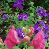 Gardening 2011 - 100_7582.JPG
