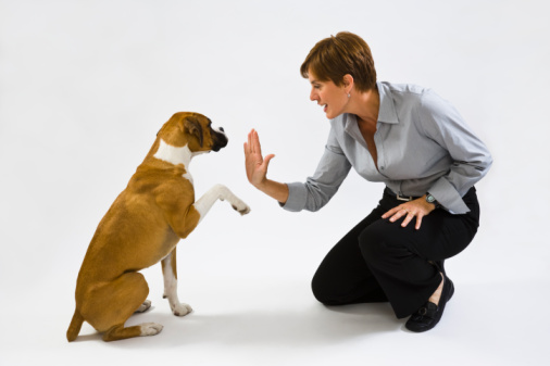 dog-training photo:dog shock training collar