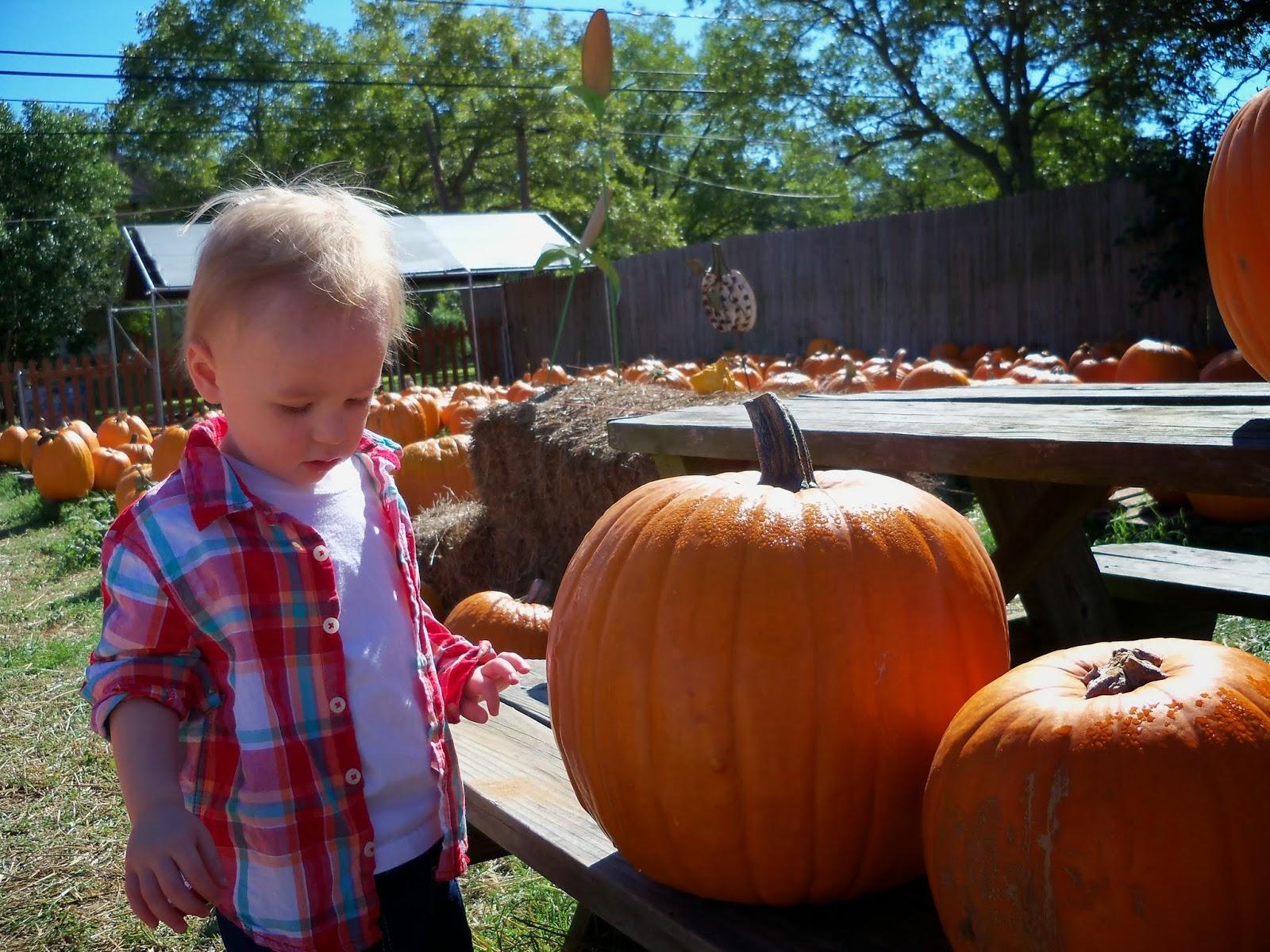 Pumpkin Patch - 115_8229.JPG