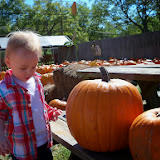 Pumpkin Patch - 115_8229.JPG