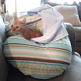 Kitteh - IMG_20120722_100902.jpg