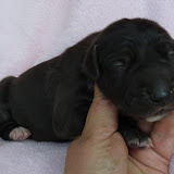 Black female @ 1 week/available