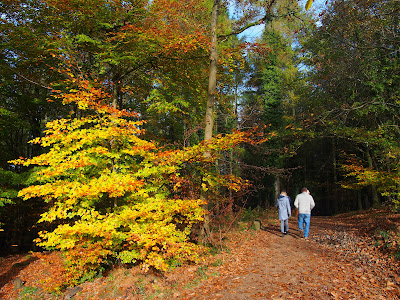 Bright autumn colours