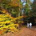 Forest of Dean Sculpture Trail Walk
