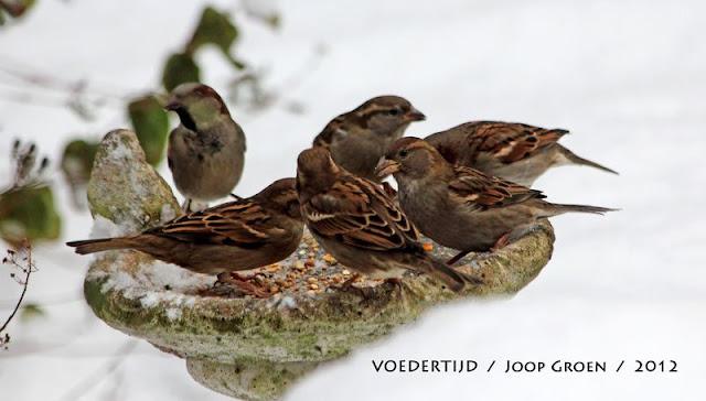 Winterkiekjes Servicetv - Ingezonden%2Bwinterfoto%2527s%2B2011-2012_59.jpg