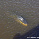 04-06-12 Myaka River State Park - IMGP4423.JPG