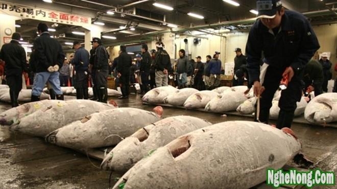 Nghệ thuật bảo quản cá tươi của ngư dân Nhật Bản