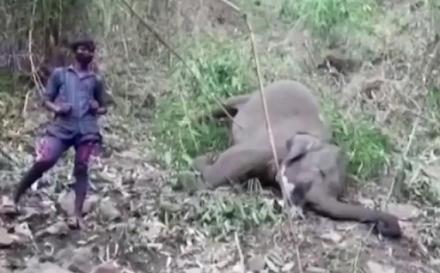 Μυστήριο καλύπτει τον θάνατο 18 άγριων ασιατικών ελεφάντων στην Ινδία