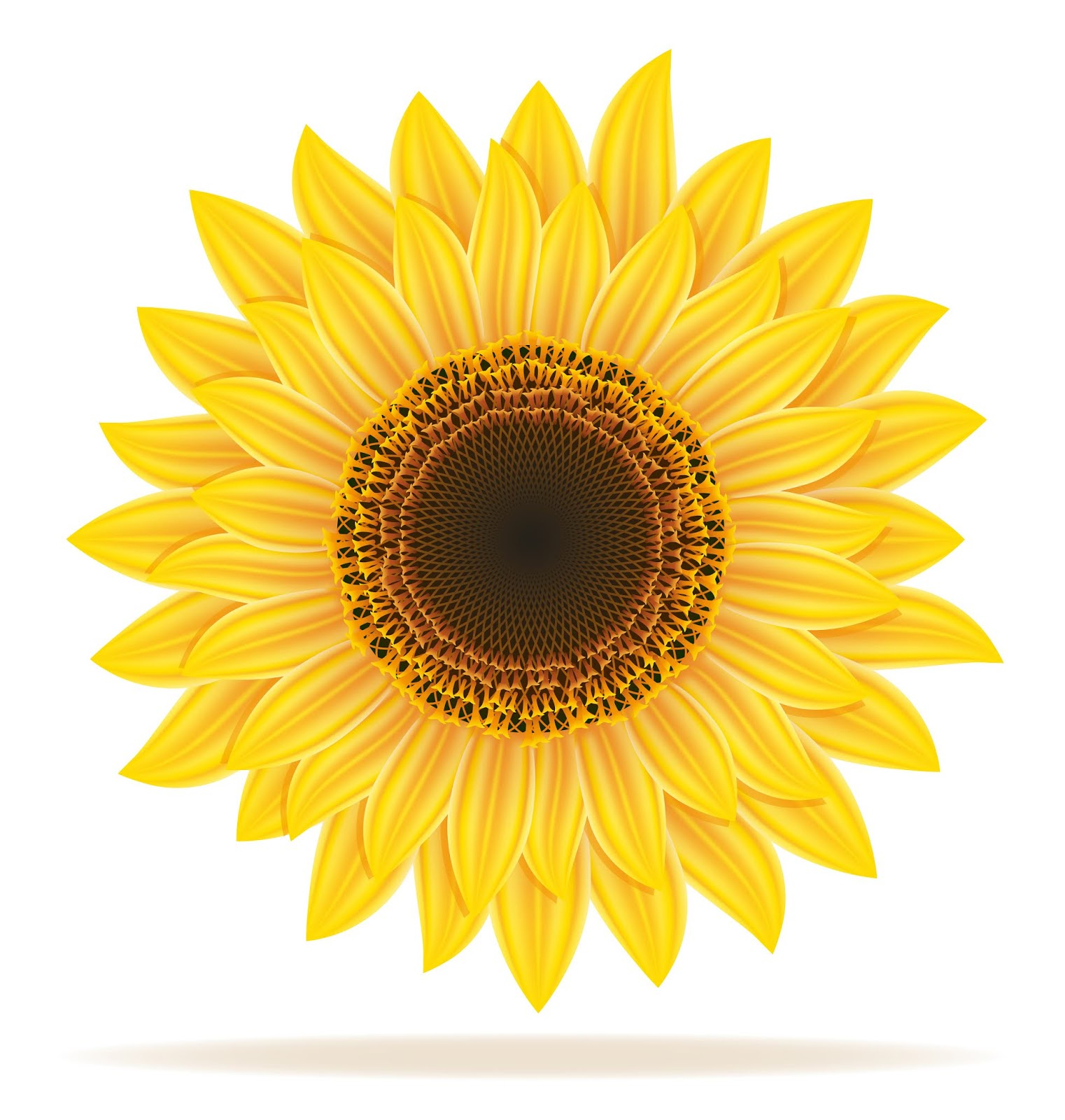 Sunflower Vector Illustration Free Download Vector CDR, AI, EPS and PNG Formats