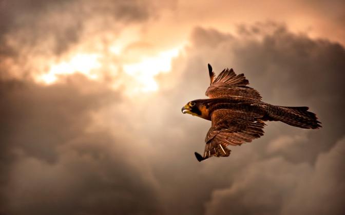Take Flight by Michael kaldani1