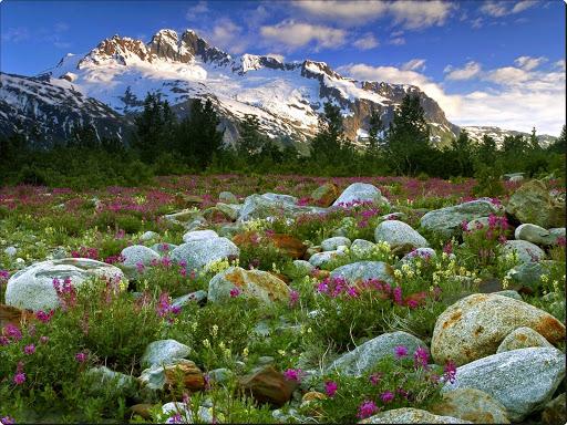 Rock Garden, Alsek River, British Columbia, Canada.jpg