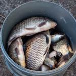 20140517_Fishing_Bochanytsia_039.jpg