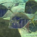 02-08-15 Corpus Christi Aquarium and USS Lexington - _IMG0511.JPG