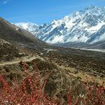 Vallée du Langtang, Népal - 13