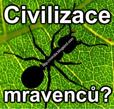 Proč mravenci přežijí lidskou populaci