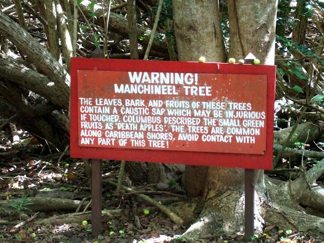 Mancenilheira, a árvore da morte