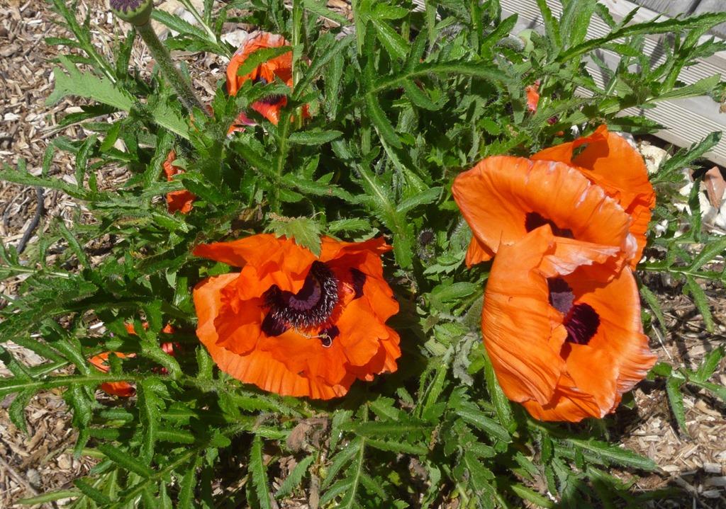 [Spring+flowers9t%5B3%5D]