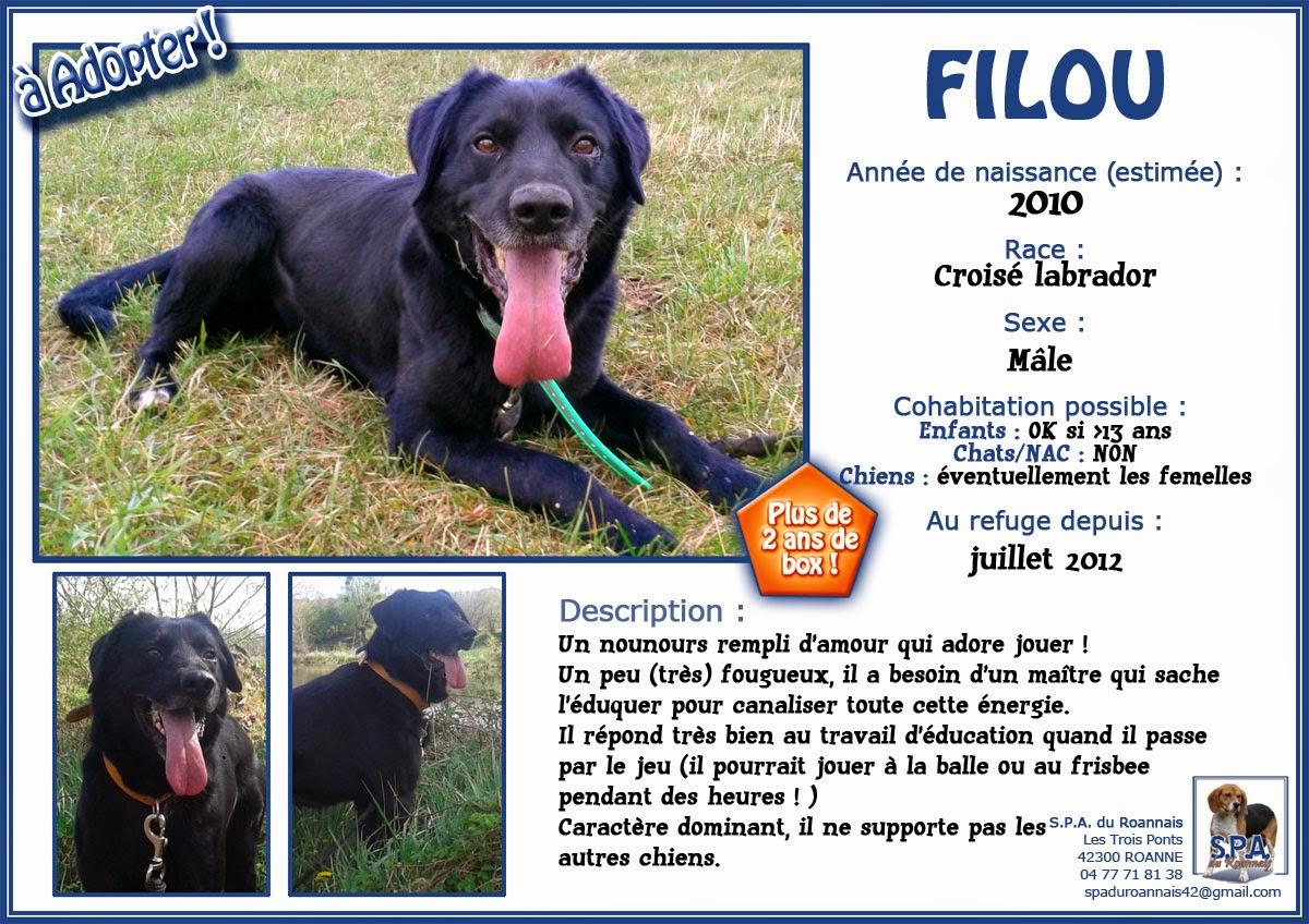 FILOU  -  croisé Labrador noir 9  ans  (7  ans de refuge) Spa du Roannais à Roanne (42) Fiche-FILOU-2010