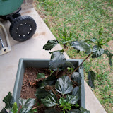 Gardening 2010 - 101_0903.JPG