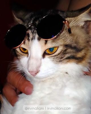 kucing dikandang atau dilepas