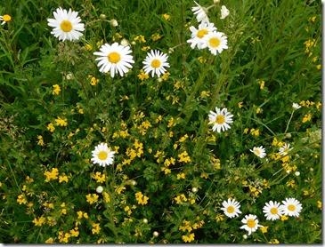 8 wild flowers