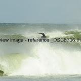 _DSC8706.thumb.jpg