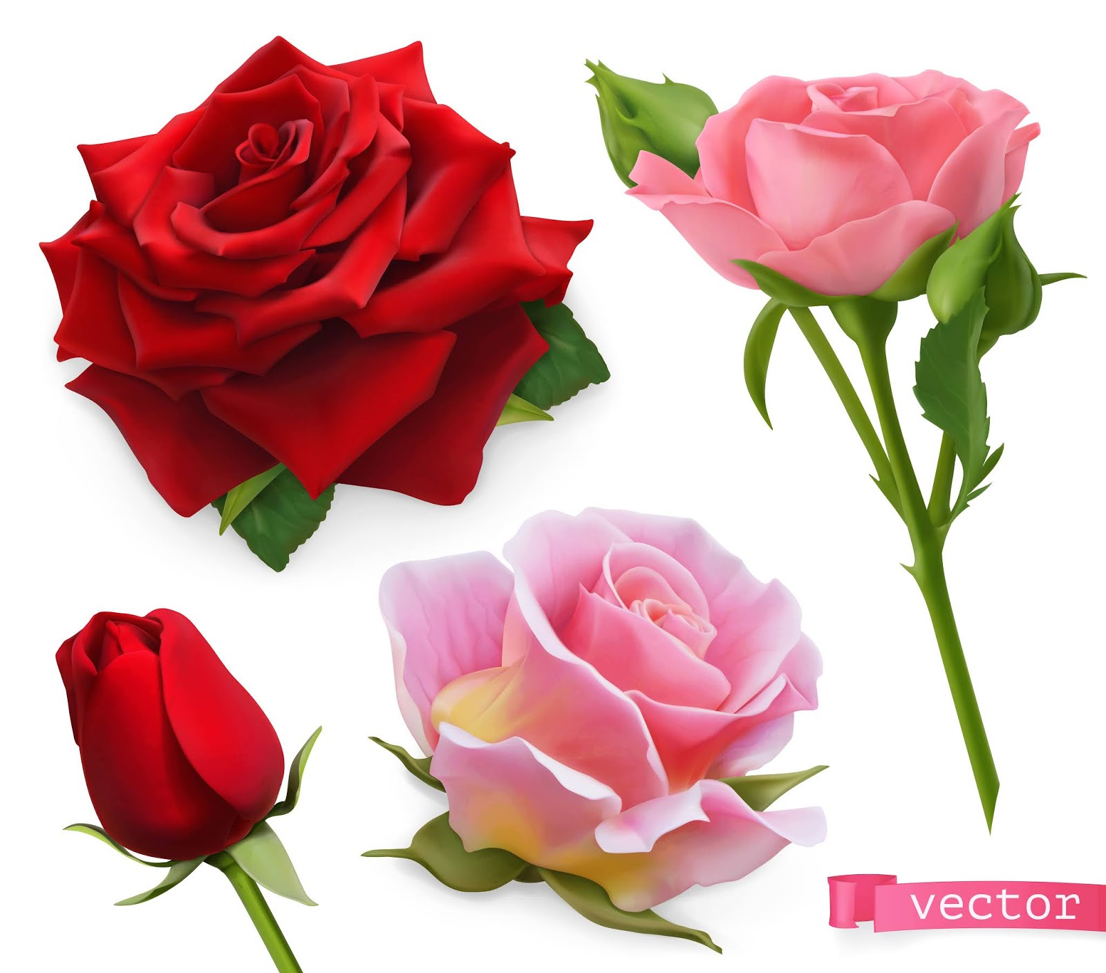Red Pink Roses 3d Realistic Vector Set Free Download Vector CDR, AI, EPS and PNG Formats