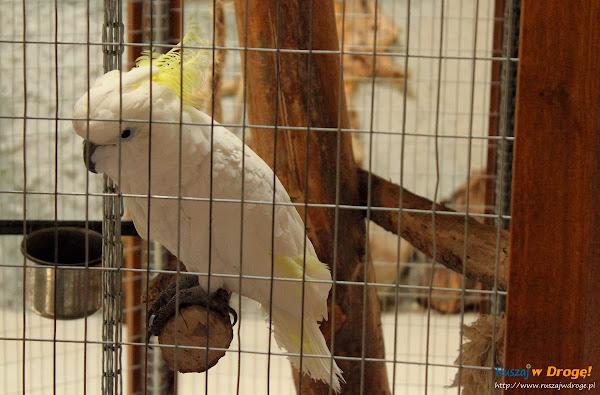 Tuchlino Park Egzotycznych Zwierzaków - Kakadu Didżej