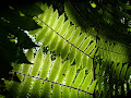 Sun through leaves | photo © Hugh St Lawrence
