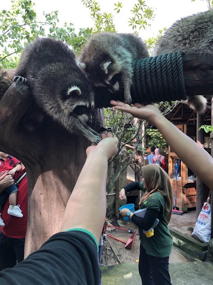 Farm In The City Petting Zoo yang Memang Awesome Untuk Seisi Keluarga