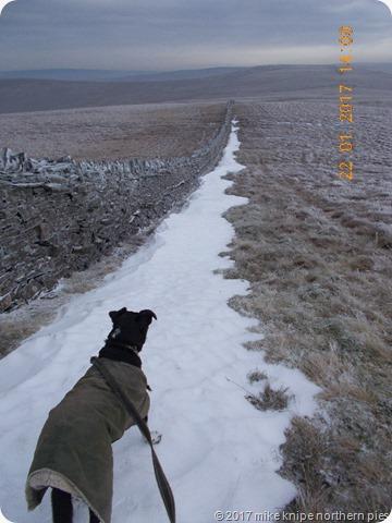 ltd insists on walking on the snow