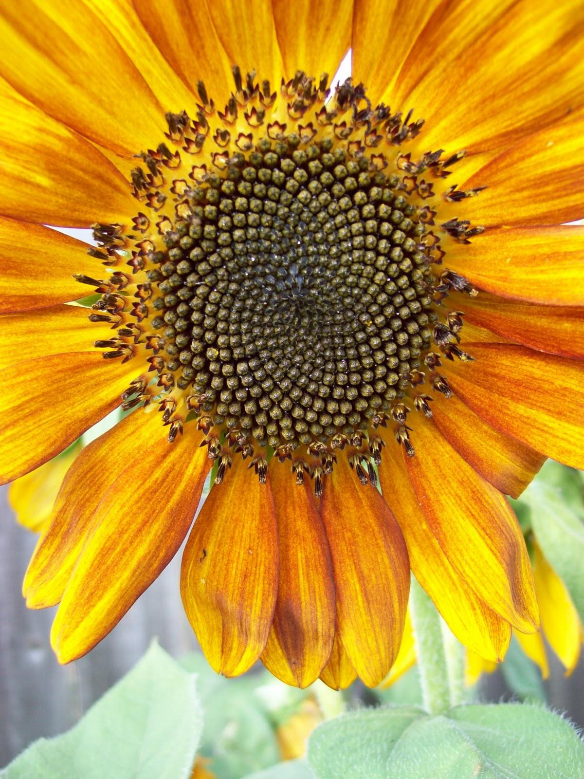 Gardening 2009 - 101_4570.JPG