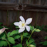 Gardening 2014 - 116_1142.JPG