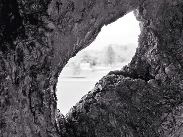 View through a tree
