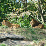 Pittsburgh Zoo Revisited - DSC05104.JPG