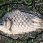 20160611_Fishing_Pryvitiv_026.jpg