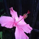 Gardening 2013 - IMG_20130330_094426.jpg