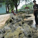 Fossil wood park maintained by geological survey of India at Tamilnadu