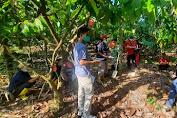 Berdayakan Rumah Tangga di Pedesaan, Program READSI Tingkatkan Kompetensi Petani Kakao