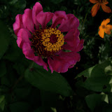 Gardening 2011 - 100_8637.JPG
