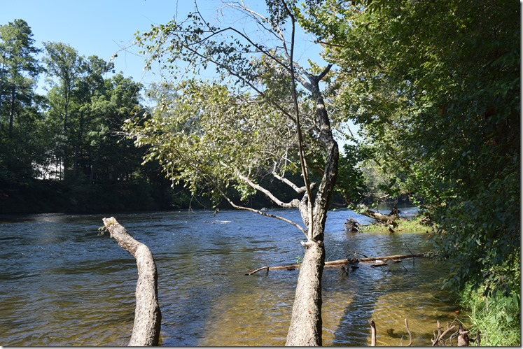 Trees over Saluda River