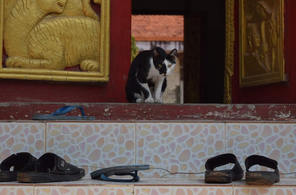 A goofy temple cat valiantly guards the door to the temple...