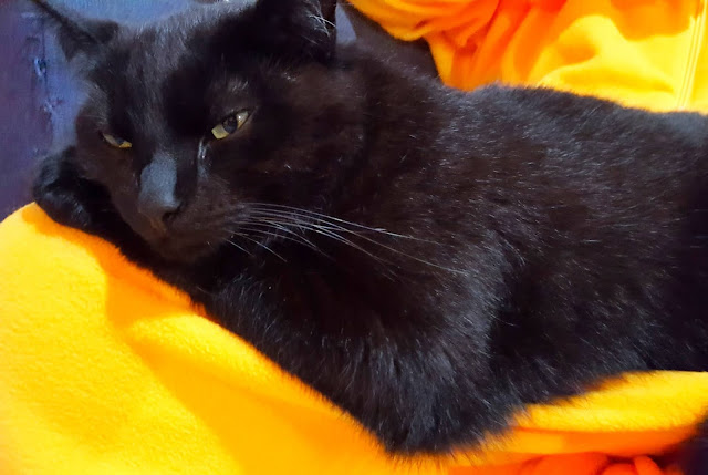 Thoughtful cat on very yellow blanket