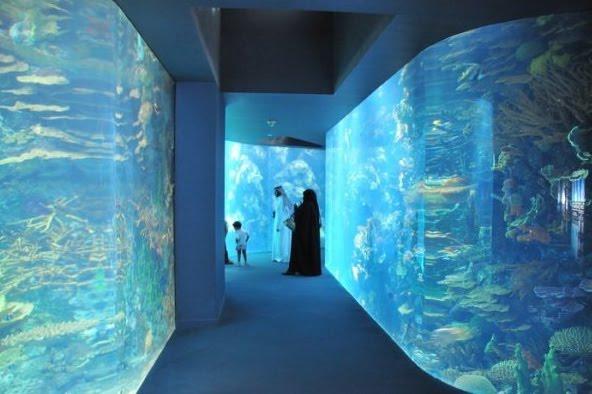 Kuwait - aquarium