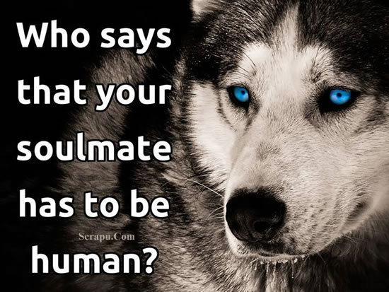 Who says that your soulmate has to be human. image