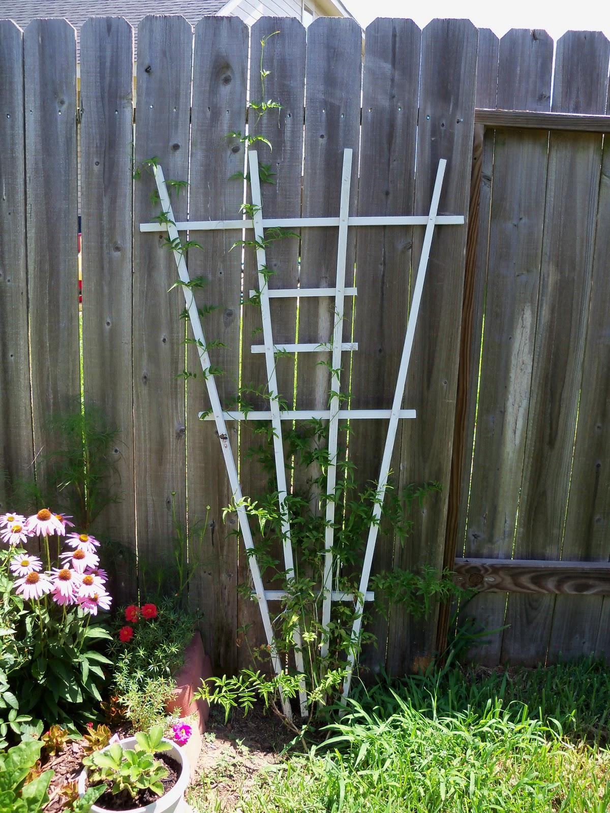 Gardening 2010, Part Three - 101_4350.JPG